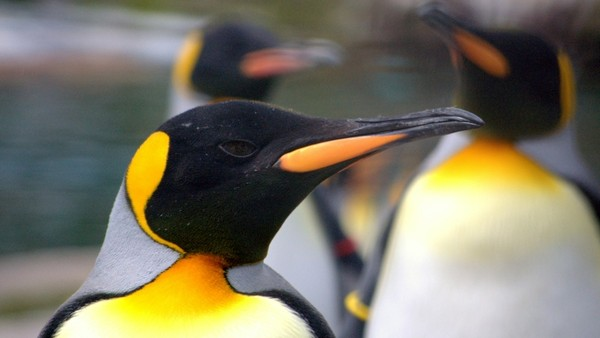 Penguin 2.0: Should Performance Marketers be Worried?