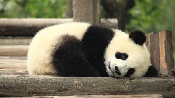 Google Panda 4.1 Confirmed and Analysed