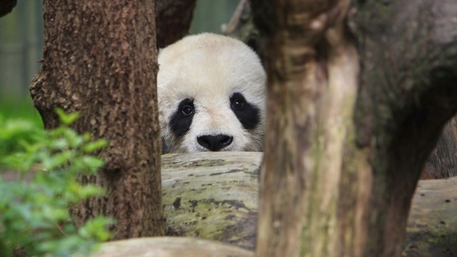 Q&A: Searchmetrics Founder and CTO Dissects Google Panda 4.1