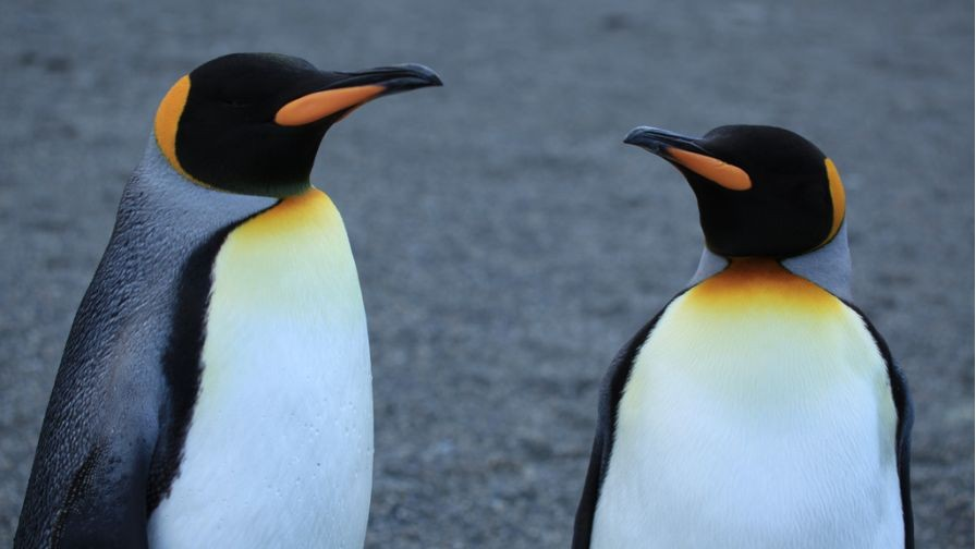 Post-Penguin Link-building Best Practices