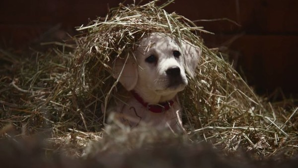 Super Bowl XLIX Ads Signal Shift in Brand Positioning Strategy